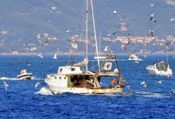 barca pesca a strascico
